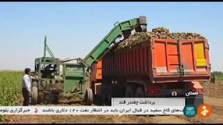 Iran Mechanized Sugarbeat harvest, Ali-Abad county, Golestan برداشت چغندرقند علي آباد