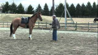 First Session with a Hot Horse