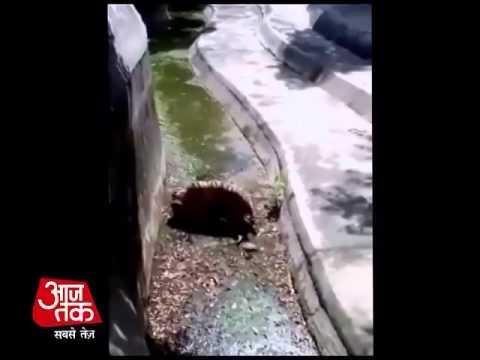 Delhi ke zoo  me ek admi ko bagh ne jinda mar dala