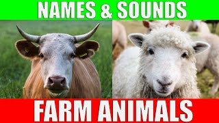 Farm Animals Names and Sounds for Kids to Learn | Learning Farm Animal Names and Sounds for Children