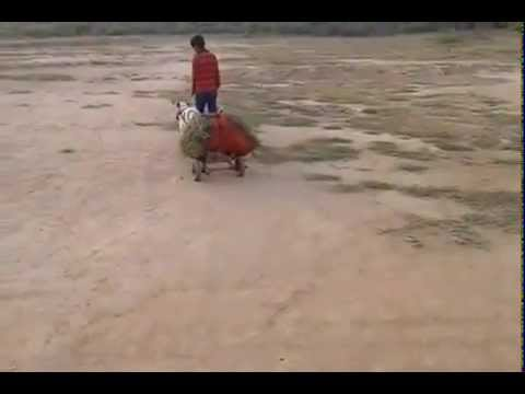 Xxx Mp4 Indian Deshi Dog Funny Video 2015 3gp Sex