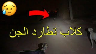كلاب تطارد الجن/ صوت طلق نار داخل بيوت مهجوره !!!