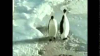 Penguin slaps other penguin