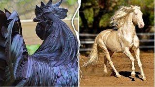 10 حيوانات لديهم ألوان غريبة و عجيبة , لن تصدق أنهم موجودين حقاً .. !!