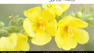 خرید اینترنتی سخنرانی دکتر ناصر رفیعی اورجینال