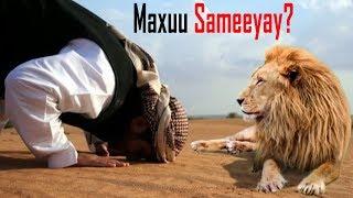 Daawo isaga oo salaad ku jira ayuu Libaaxii yimid ?  keddib maxaa dhacay !!!! ?