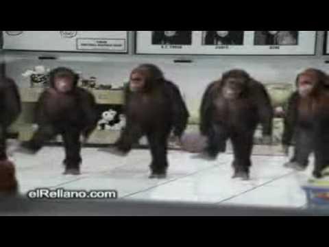 majmunat me defa