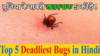 दुनिया के सबसे खतरनाक/ जहरीले 5 कीड़े   Top 5 Deadliest Bugs in Hindi