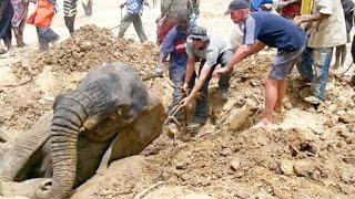 Google Earth Hero: Save The Elephants