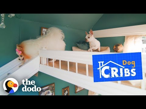 Take a Tour of The Most Luxurious Dog Houses Ever The Dodo