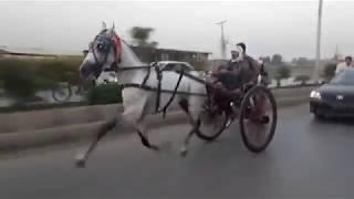 SYED DA MALANG HORSE RACE PESHAWER PAKISTAN