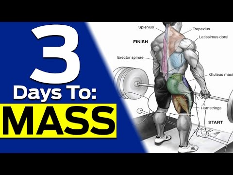 How To Create The Ultimate Full Body Workout to Build Muscle (5 EASY STEPS TO BIG GAINS!)
