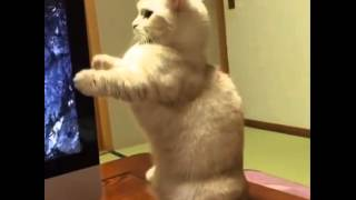 Cat Surprised By Imac CD Popping Out