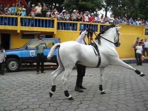 Dancing Horse Boaco Nicaragua