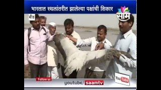 Endangered Birds 'Krauncha' killed in Beed for Food