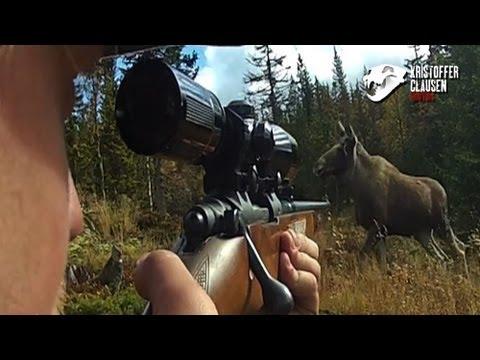 Hunting moose filmed with camera mounted on gun, Awesome killscene.