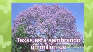 beneficios del kiri a Mexico