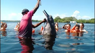 Living Conditions of Pink Dolphin in Brazil Improves with Tourism Boom