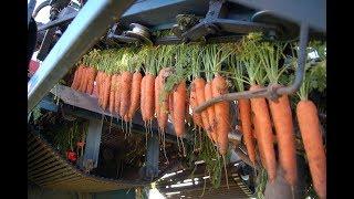 Amazing Fruit Harvesting Machines Compilation - How Do They Do It