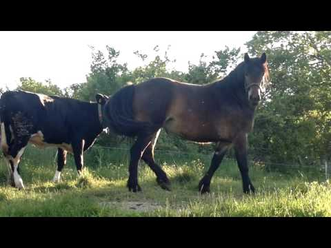 Xxx Mp4 Big Horse Small Cow 3gp Sex
