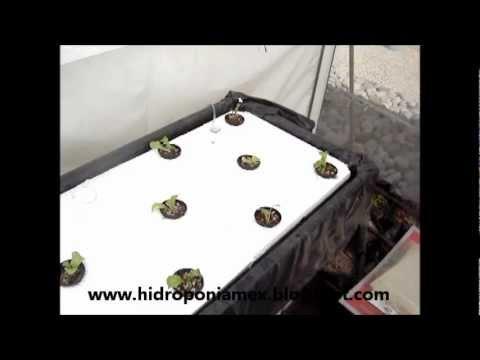 Hidroponia ¨Raiz flotante¨ como se hace