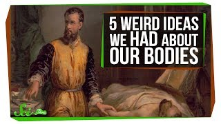 5 Things Humans Got Really Wrong About Our Bodies