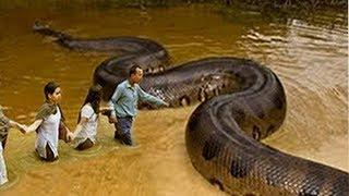 أخطر 10 انواع ثعابين فى العالم