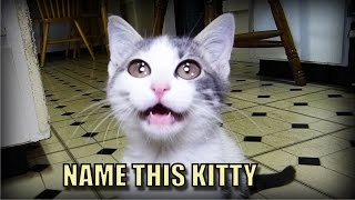 Talking Kitty Cat 46 - Random Needs A Name