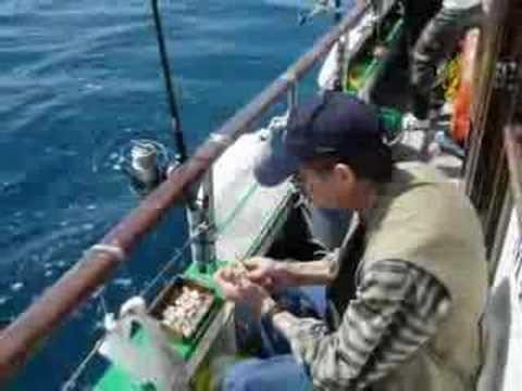 Pesca Desportiva 18 Lobos do Mar 02 Setúbal