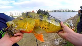 Sight Fishing GIANT Peacock Bass in FLORIDA Pond!!!
