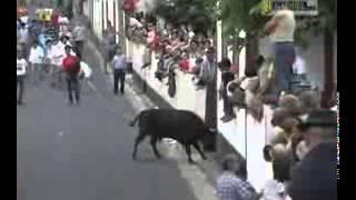 Crazy Buffalo Hitting... Funny video.. (S.K video)