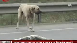 Yürek Burkan Manzara ( Yavrusunun başından ayrılmayan anne köpek)