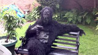 Comedy and Cocktails- April the Ape Funny Video.