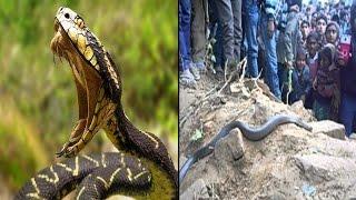 इस इच्छाधारी सांप की बजह से लोगो ने छोडा गांव| UP: Ichchadhari Naag (Snake) Creates Panic In Village
