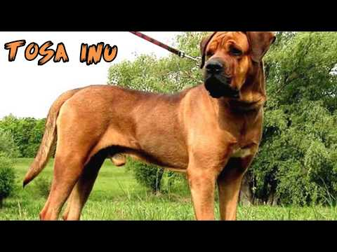 Top 10 Strongest Dogs in the