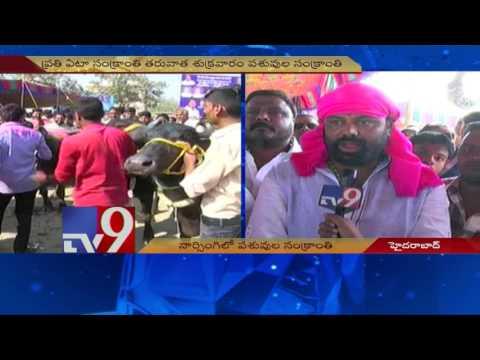 Desi Bulls steal the show in 'Animal Sankranthi' in Hyderabad - TV9