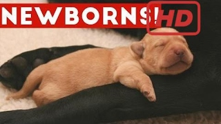 The Cutest Newborn Puppies & Kittens Weekly Compilation 2017 | Funny Pet Videos