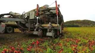 Furmano's Tomatoes - How It's Made
