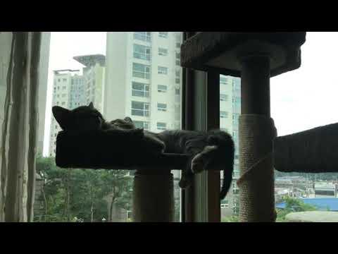 My Kittens Slepping