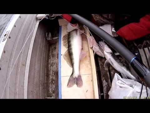 рыбалка на судака весной видео апрель