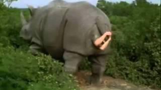 Ace ventura  escena del rinoceronte latino