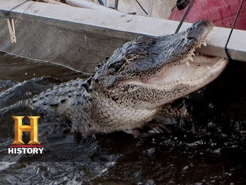 Swamp People: Gator of the Year (S6, E12) | History
