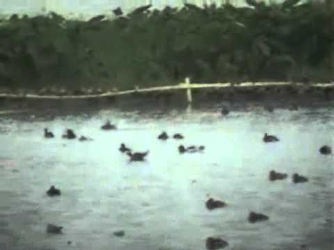 Birds watching at Santragachi lake