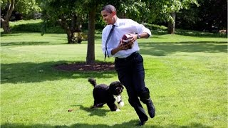 A fluffy farewell to Bo Obama