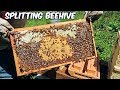 beekeeping--walk-away-beehive-split