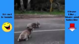 Funny Animals   When animals attack people   Funny Videos 144p