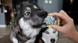 3 DIY Hacks To Clean Your Dogs Teeth!