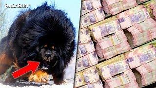 ¿Sabías qué? | Esto es lo que vale el perro más caro del mundo