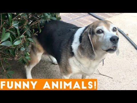 Xxx Mp4 Funniest Pets Amp Animals Of The Week Compilation November 2018 Funny Pet Videos 3gp Sex