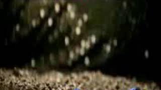 আমি কেমনে তোরে ভুলিরে খুব সুন্দর একটি গান না সুনেলি মিস★Sj king multimedia★